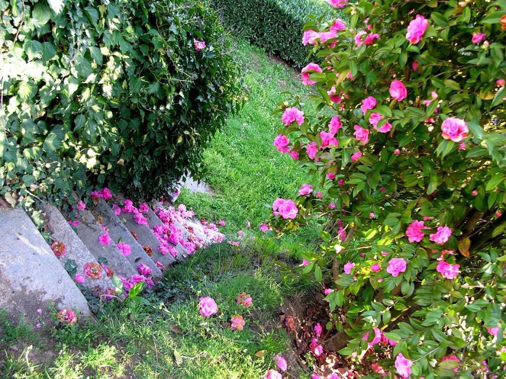 bb Biella con giardino